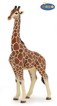 Kniha: Žirafa samecautor neuvedený