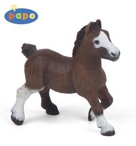 Kniha: Pony shetlandský hříběautor neuvedený