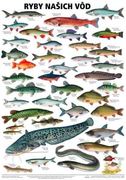 Kniha: Ryby našich vodautor neuvedený