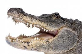 Kniha: Pohlednice 3D krokodýl hlavaautor neuvedený