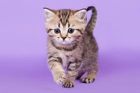 Kniha: Pohlednice 3D kotě mourovatéautor neuvedený