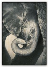 Obraz: Little Elephant (340x485)
