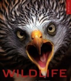 Wildlife - život zveri vo voľnej prírode